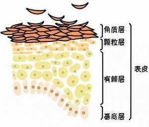 解析激素依赖性皮炎刺痛的分类及原因!